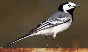 Un pájaro para mí entrañable, porque siempre me recordará a mi madre.